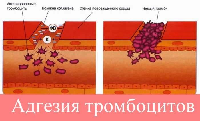 Адгезия тромбоцитов